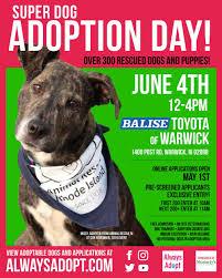 adoption events u2014 always adopt