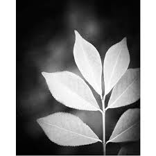 Black And White Photography Black And White Photography Nature Leaf Black White Photos