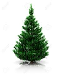 20 611 evergreen tree stock illustrations cliparts and royalty