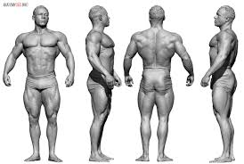 Human Anatomy Reference Pose 360 83 Thousand Results Found On Yandex Images 3d Sculpt