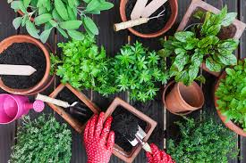 Soil Mix For Container Gardening - the difference between potting soil and potting mix