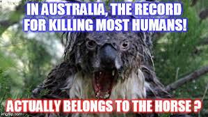 Australia Meme - angry koala meme imgflip