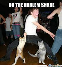 Meme Harlem Shake - harlem shake cat edition by sheeppusher meme center