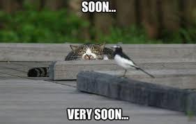 Soon Cat Meme - soon www meme lol com funny cats pinterest meme cat and