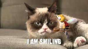Magickalideas Com by New Grumpy Cat Memes Littlefun Grumpy Cat Eat A Snickers 7 Best
