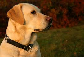 frequently asked questions allergen detection service dogs