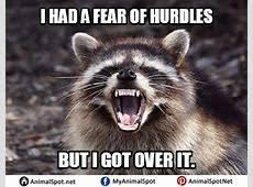 Raccoon Meme - excellent meme raccoon elledecor