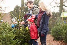 Decorated Christmas Trees Delivered Uk by Where To Buy Real Christmas Trees In Leeds And Bradford The List