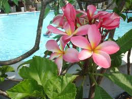 Landscaping Around Pools by How To Landscape Around A Pool In Florida Landscaping Plants