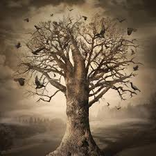magic tree with crows stock photos image 37687653