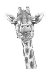 color of giraffe eliolera com