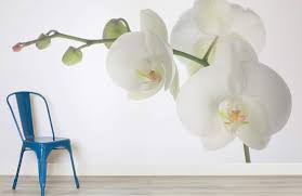white orchid flower white orchid wallpaper wall mural muralswallpaper co uk
