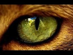 Eye Of The Tiger Meme - eye of the tiger remix survivor youtube
