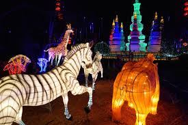 Potter Park Zoo Lights by Zoominations Chinese Lantern Festival 2015 At Lowry Park Zoo