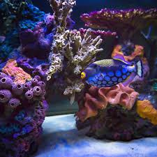 types of aquariums features and benefits infinity aquarium design