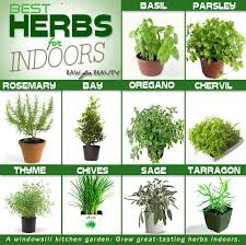 herb growing chart herbs indoor herbs herbs and natural