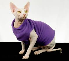 sphynx sweaters cat clothes cat shirt sphynx cat clothes purple amethyst