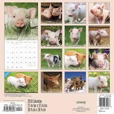 lovable pigs 2018 wall calendar calendars com