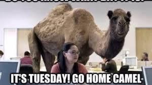 Happy Tuesday Meme - memes tuesday memes happy tuesday meme memes pinterest