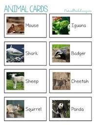 animal sorting herbivore omnivore and carnivore animals tpt