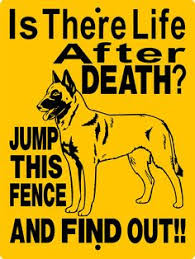 belgian malinois quotes this is exactly how people that own a mal react to us when they