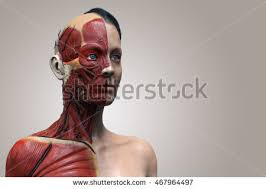 Female Muscles Anatomy Human Anatomy Muscle Anatomy Face Neck Stock Illustration
