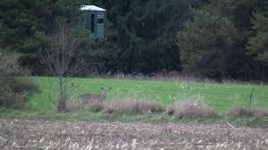 Natural Hunting Blinds Hunters Kill 196k Deer During Wisconsin Gun Season Wluk