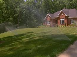 how to identify and get rid of common lawn pests diy