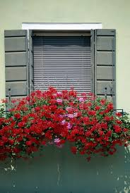 What To Plant In Window Flower Boxes - full sun annual flowers for window boxes home guides sf gate