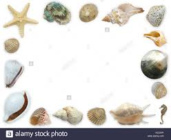 assorted seashells framework of assorted seashells starfish and seahorse with