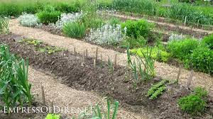 kitchen garden ideas 20 ideas for your home veggie garden empress of dirt