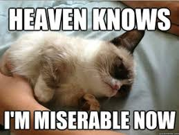 Tard The Grumpy Cat Meme - grumpy cat loves the smiths nerd alert pinterest grumpy cat