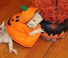 Dragon Halloween Costumes Halloween Pet Costume Love Bearded Dragon Halloween Costume