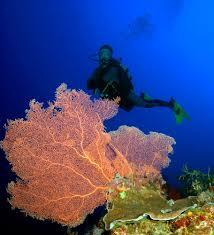 phu quoc dive centre rainbow divers vietnam