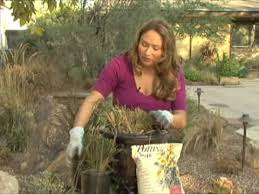 how to multiply your plants ornamental grasses grass
