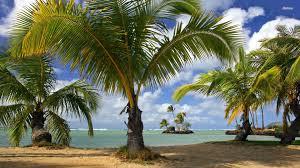 Palm Tree Wallpaper Palm Tree Leaves Template Palm Trees Paper Petals Expoluzrd