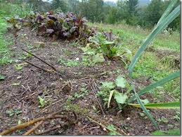 how to prepare and take care of a no dig vegetable garden