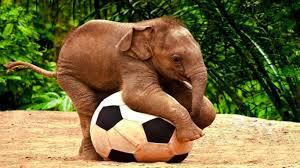 hd baby elephant cartoon images