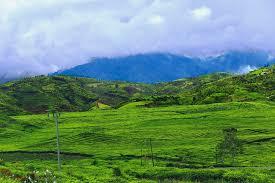 Teh Kayu Aro wajib tau kebun teh kayu aro ternyata yang terluas di dunia