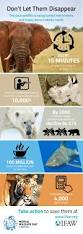 71 best animal facts images on pinterest animal facts