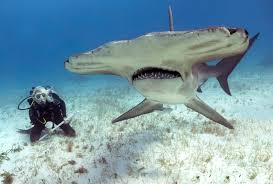 education key strategy for shark species success the national