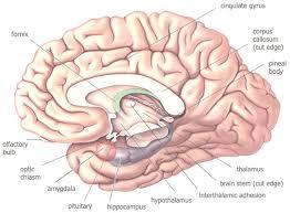 Role Of Brain Stem Neurophilosophy A Neurophilosophy Of Sensation Philosophical