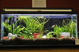 simple aquarium design ideas for bedroom area modern aquarium