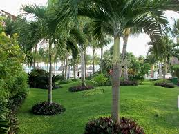 south florida landscaping ideas at tropical front garden ideas