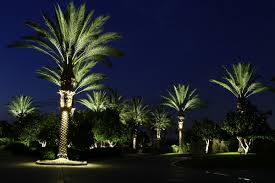 palm tree ring light roto lite inc led landscape lighting