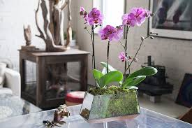 orchid arrangements how to care for an orchid arrangement