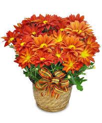 fall archives julias florist
