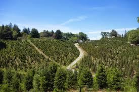Santa Cruz County Christmas Tree Farms by Jill Outside April 2014
