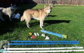 Backyard Agility Course Diy Build Your Own Agility Jumps For Backyard Fun Gone To The