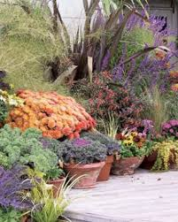 containers that keep kicking into fall fine gardening